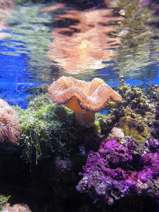 coral-457251_960_720